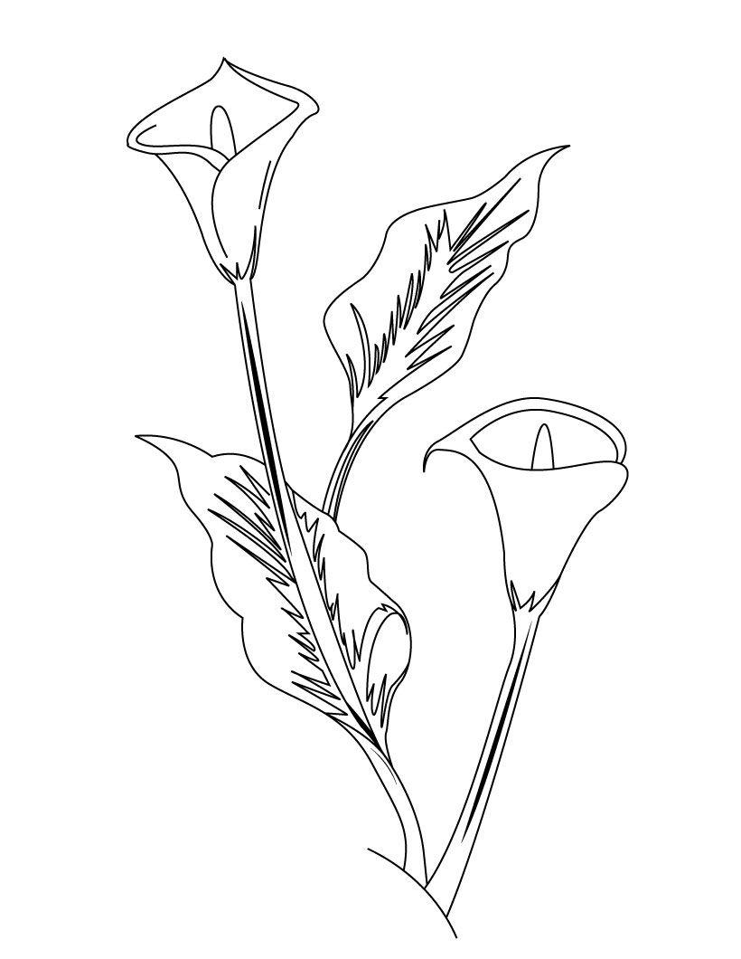 moldes para pintar flores | fomi | Pinterest | Pintar flores, Molde ...