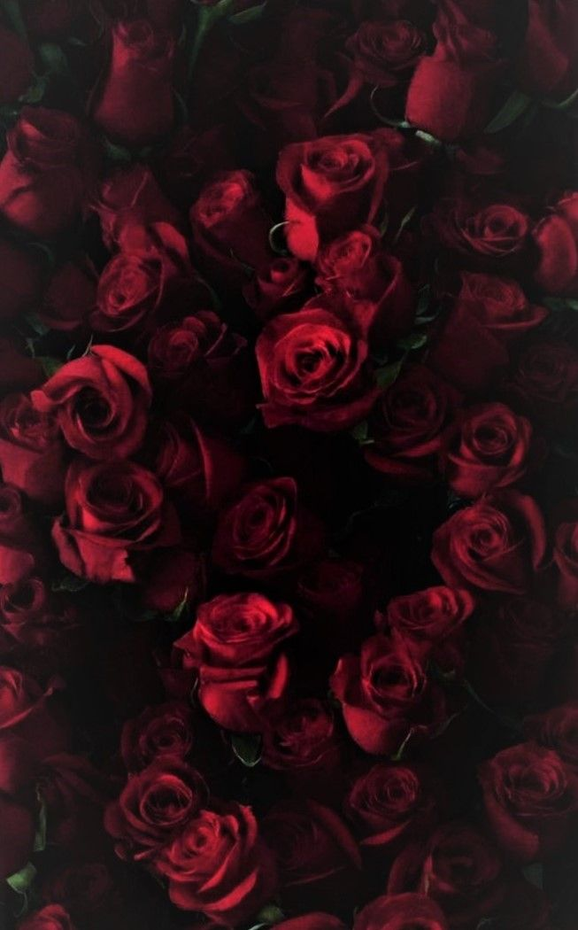 Floral Floral Pinterest Red Roses Flowers And Wallpaper