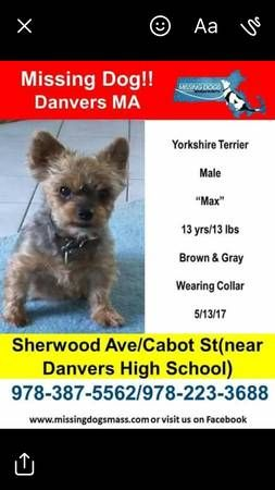 Favorite This Post Missing Yorkie Danvers Sherwood Ave Hide This Posting C Craigslist Map Data C Openstreetmap Sh Losing A Dog Yorkshire Terrier Yorkie