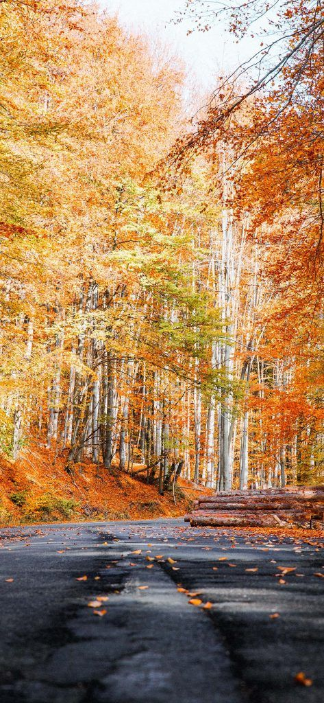 Fall Wallpapers for iPhone - FREE Download Best Autumn Wallpapers