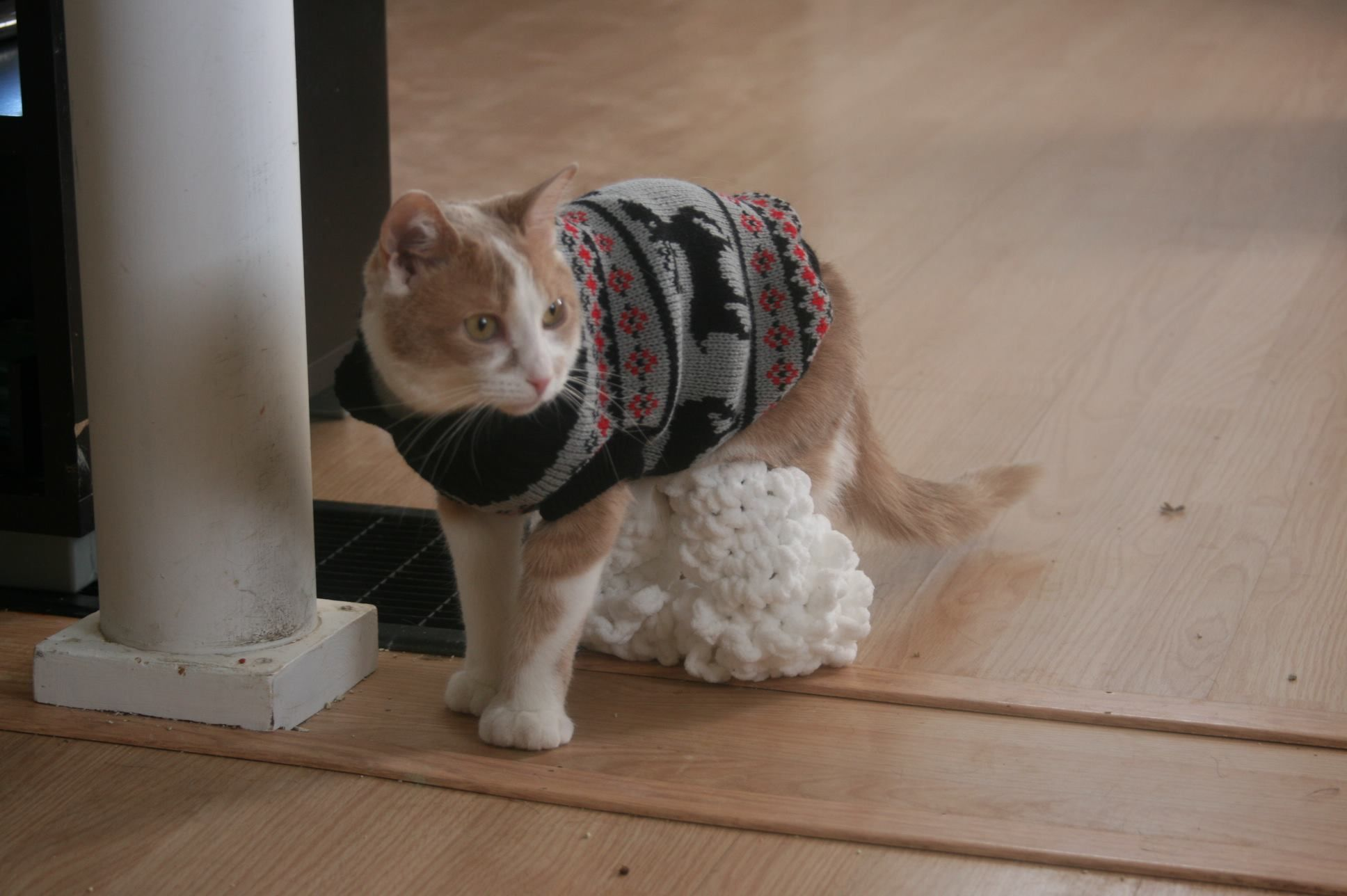 10 Charities Looking for Yarn Crafters Cats, Cat walk
