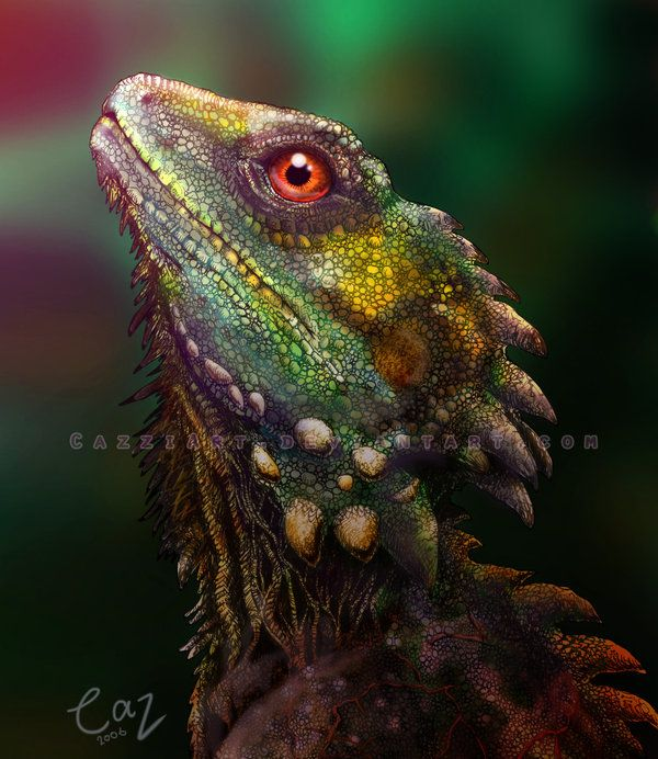 Forest Dragon Lizards - Google Search …