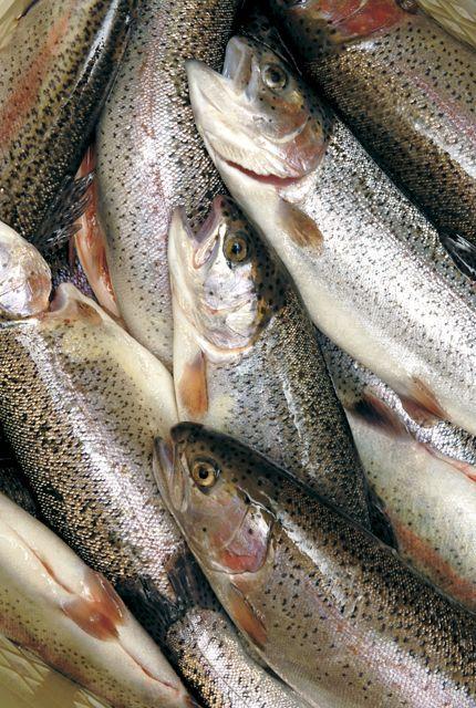 La trota fario della valnerina una delle principali for Un pesce allevato in acque stagnanti