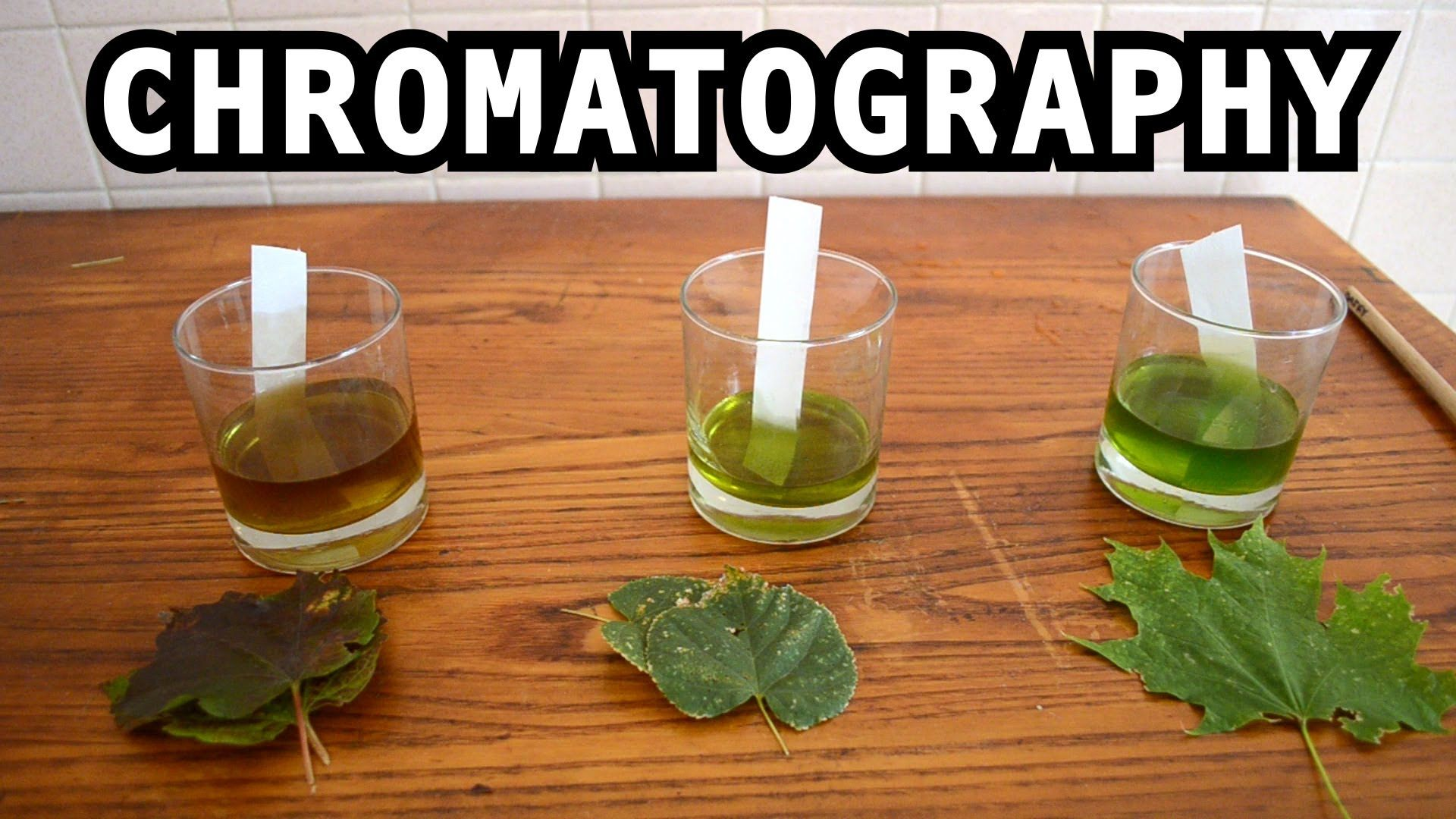 Leaf Pigmentation Demonstration You Can Do In The