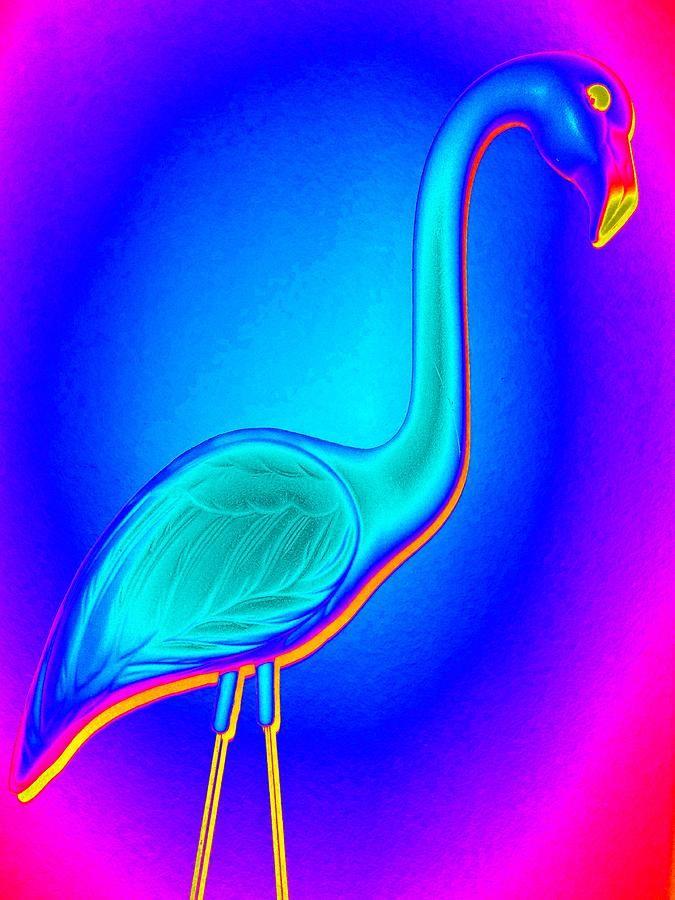 Flamingo Fling by Randall Weidner