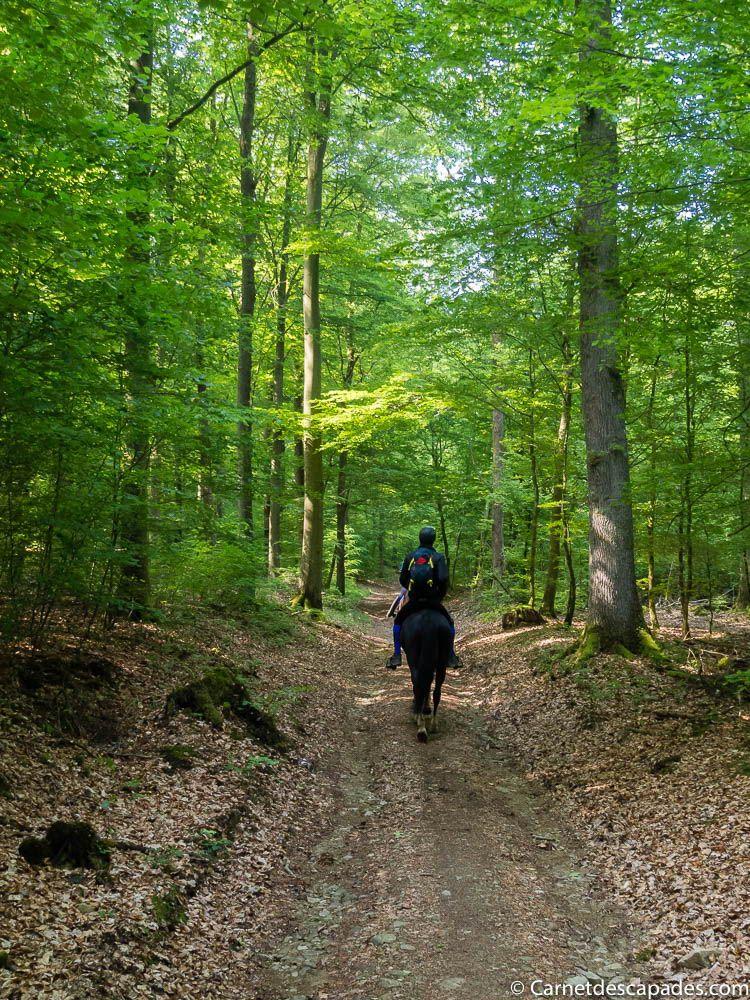Randonnée à cheval en Belgique - Grande forêt de Saint-Hubert - Blog Voyage
