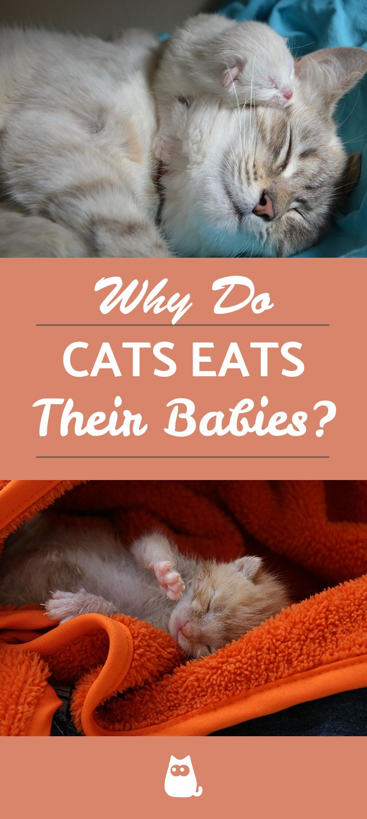 Why Do Cats Eat Their Babies? Cats, Baby kittens, Baby