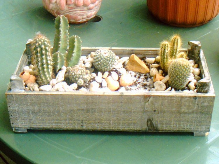 mini cactus interieur idee deco recherche google cactus pinterest cacti. Black Bedroom Furniture Sets. Home Design Ideas