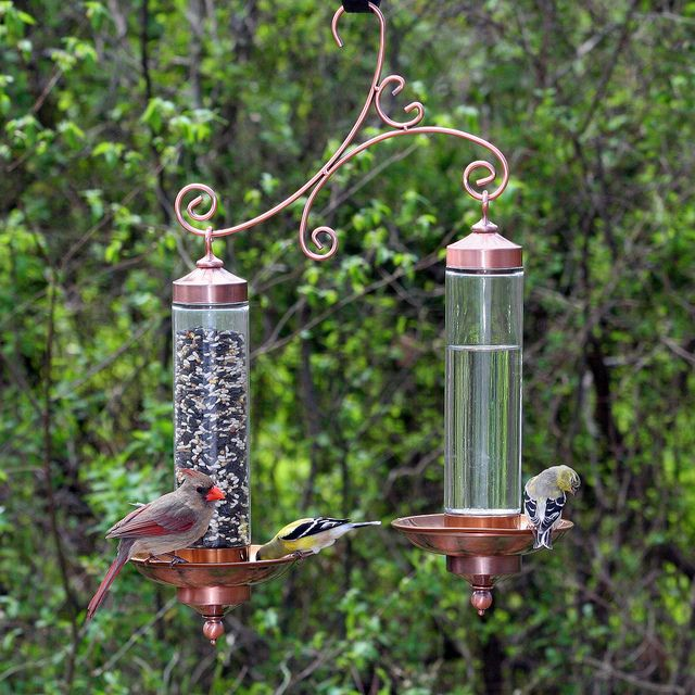 Birdscapes Copper Sip Seed Bird Feeder By Perkypet Via Flickr Glass Bird Feeders Bird Feeders Humming Bird Feeders