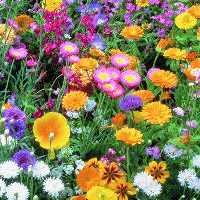 Cottage Garden Wildflower Mix Diffe Name Online For The Same American Seed 25 At Dollar