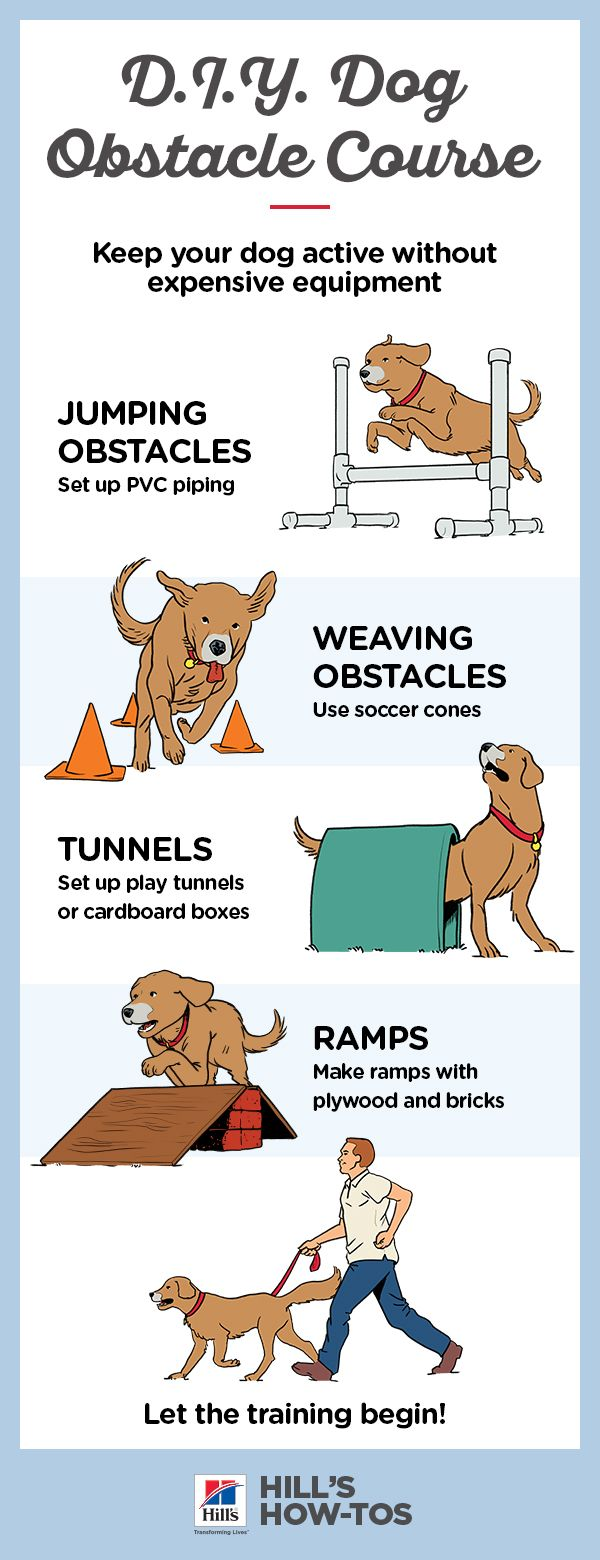 How To Make A Diy Dog Obstacle Course At Home Dog Agility Dog