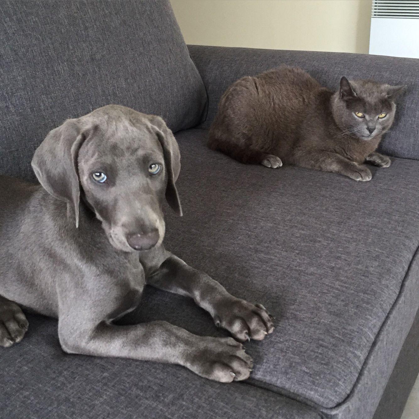 1ere rencontre chien et chat