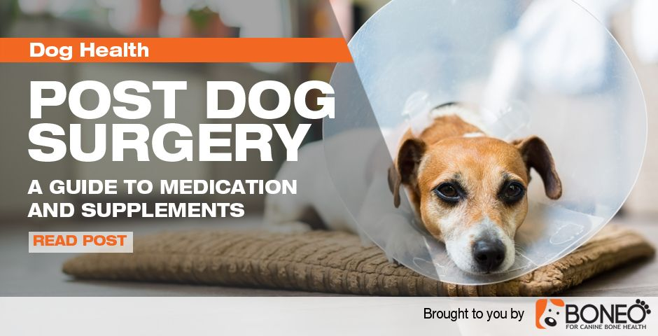 After your dog has surgery there are a lot of different