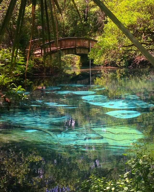 fern hammock springs is a second magnitude spring situated in a side channel of juniper creek fern hammock springs is a second magnitude spring situated in a      rh   pinterest