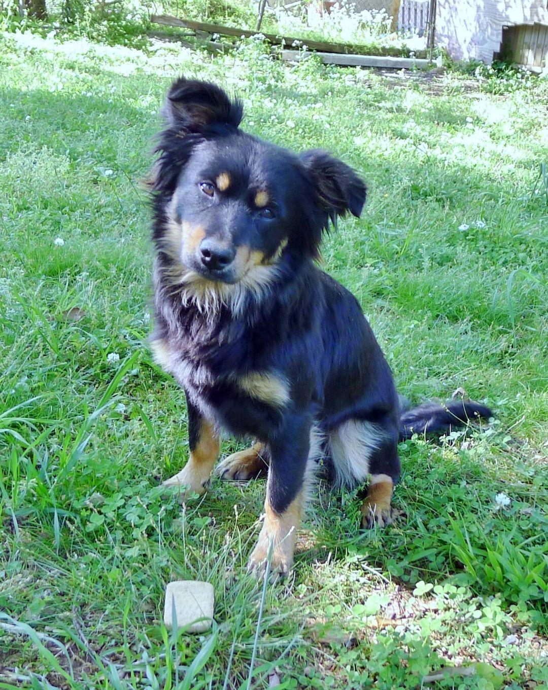 Adopt Kansas on (With images) Pet adoption, Dog adoption