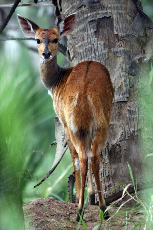 Gorongoza Majestic Animais Lindos