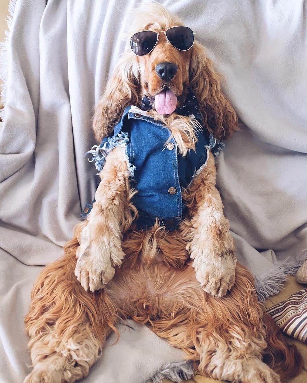 Épinglé par Aik Spy sur Beautifull dogs Dessin de chien