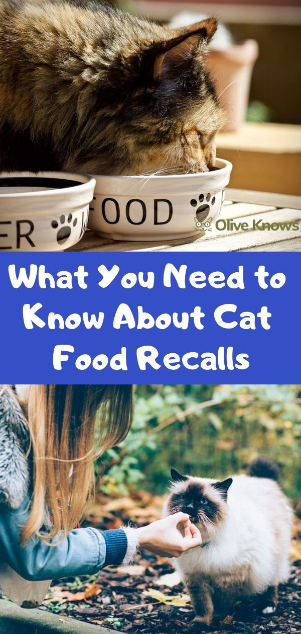 What You Need to Know About Cat Food Recalls (With images