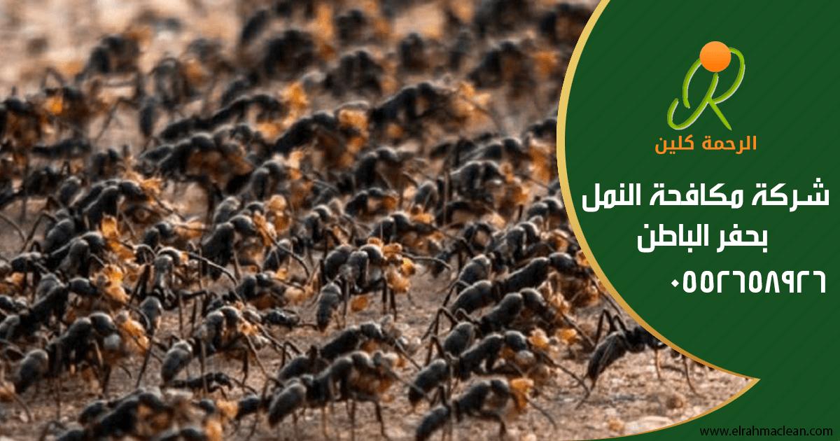 شركة مكافحة النمل بحفر الباطن How To Dry Basil Herbs Dried