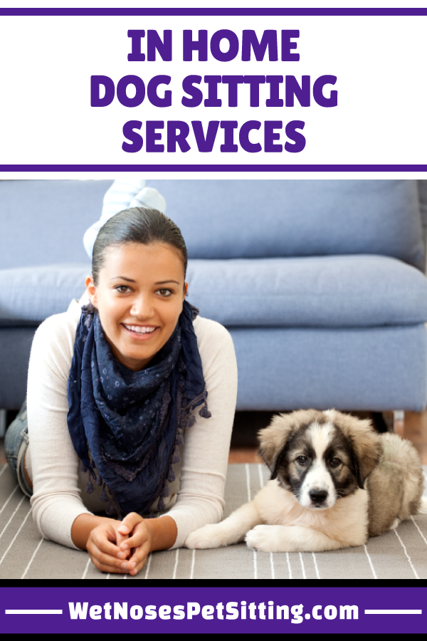 In Home Dog Sitting Services Dog training near me, Cat