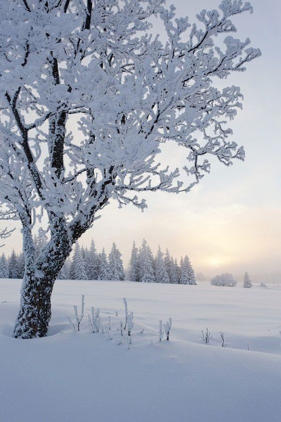 Winter Landscape, Winter