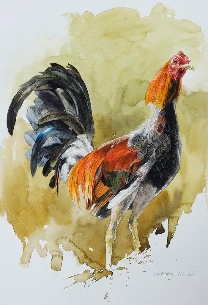 Gallo By Thian Different Ways To Wear A Scarf: Pintura De Gallo De Pelea