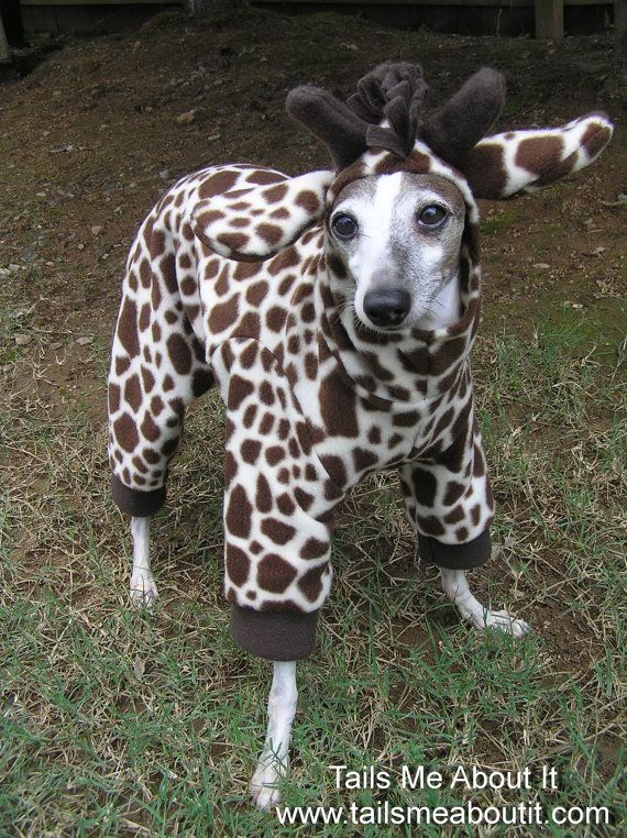 Giraffe Dog Costume Halloween Costume Italian Greyhound