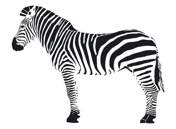 Dessin Zebre Noir Blanc Dessin Zebre Et Zebre Dessin