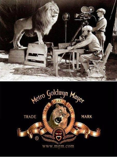 The lion used in the original MGM movie logo killed its trainer and two assistants the day after the logo was filmed.