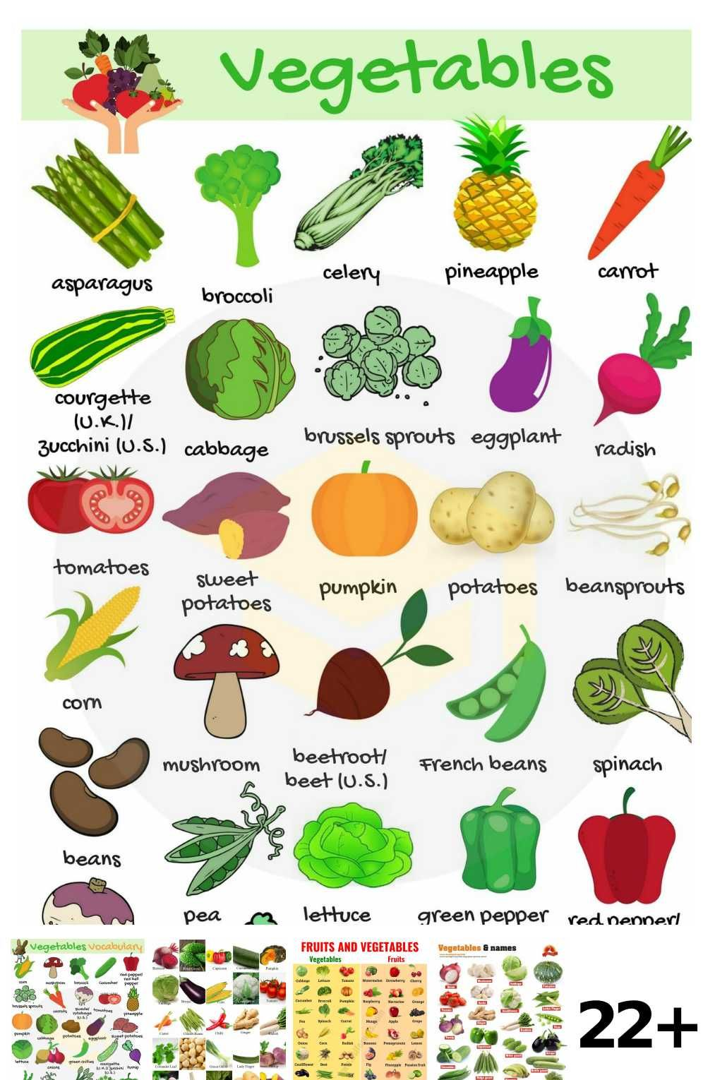 22 Vegetables Names In English Ideas Math Activities For Kids Human Body Activities Science Projects For Kids [ 1530 x 1030 Pixel ]