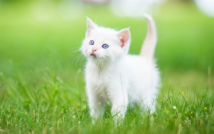 Download Wallpapers Turkish Angora 4k Small White Kitten Cute Animals Green Grass White Cat White Kittens Kitten Wallpaper Cute Animals