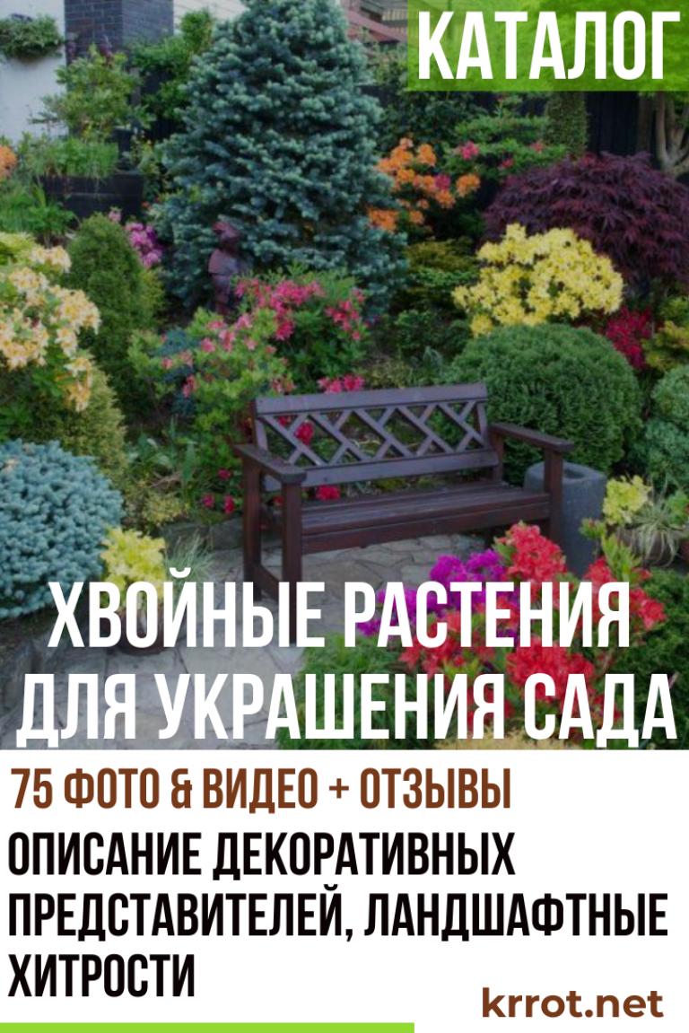 Каталог Хвойных Растений для Вашего Сада (75+ Фото ...