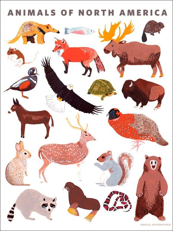 Animals Of North America Animals Posters That Stick Oopsy Daisy North American Animals American Animals Animal Posters