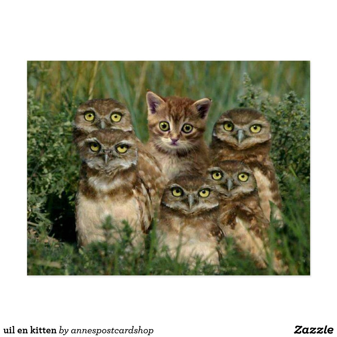 Owl And Kitten Postcard Zazzle Com In 2020 Funny Animal Pictures Cute Animals Animals Friends