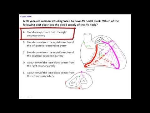Anatomy Question Blood Supply Of The Heart Conductive System