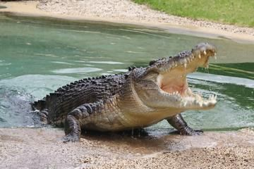 Jamaica Swamp Safari Village and Falmouth Tour from ...