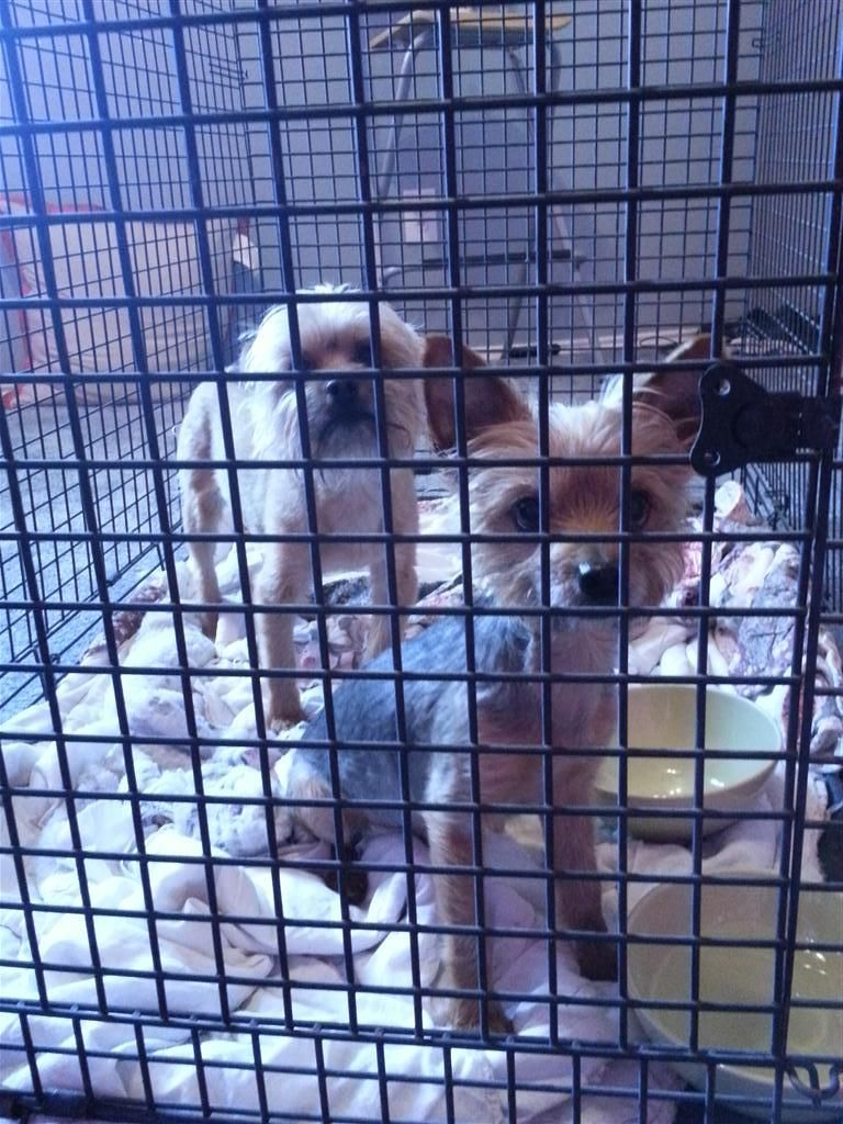 Found Dog Terrier Plano, TX, United States 75025 on