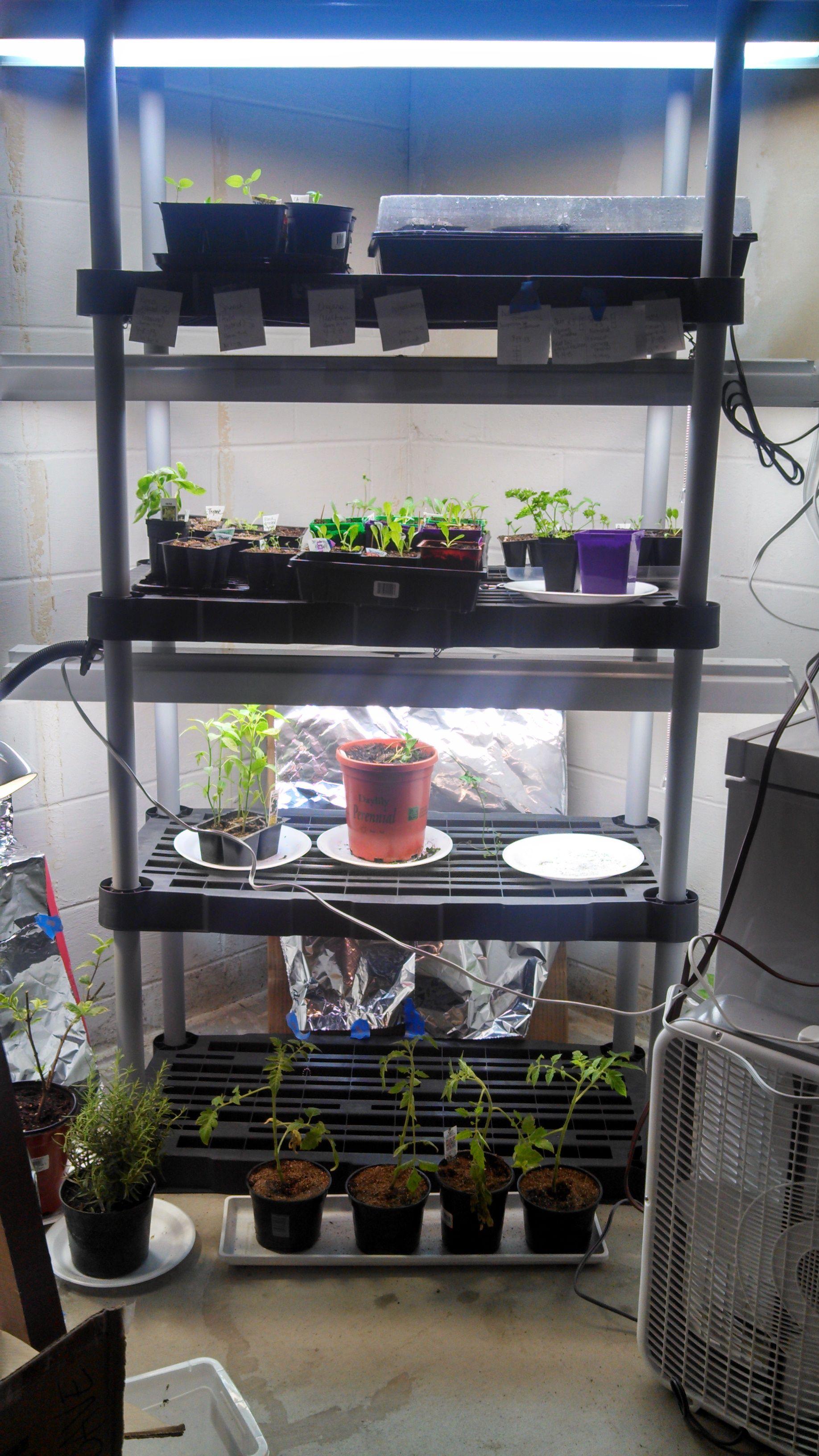 My Basement Grow Light Set Up Plastic Shelving With Fluorescent