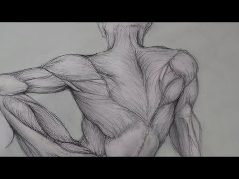 Anatomy Drawing For Artists - Drawing Human Anatomy   My Drawing Tutorials - Art Made Simple!
