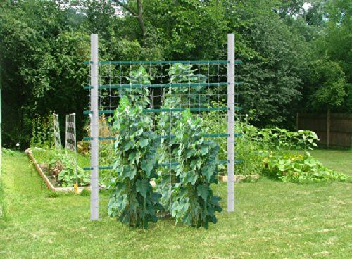 Amazon Super Heavy duty Trellis with Net Squash Trellis