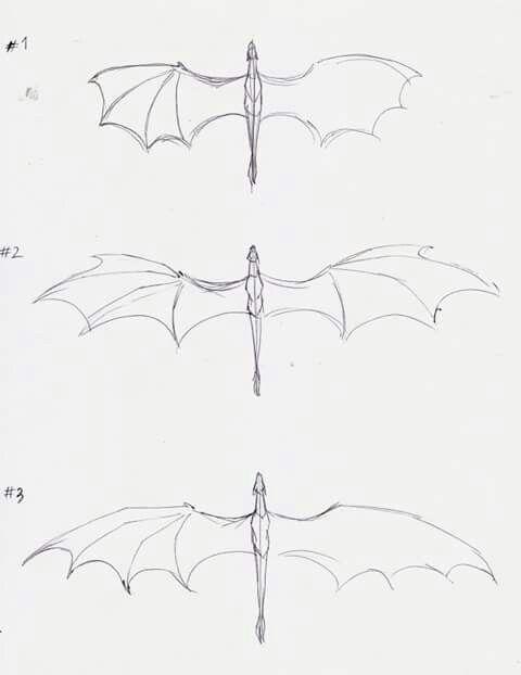 Pin von Cheryl Sjahandi auf Animal Drawing Anatomy | Pinterest ...