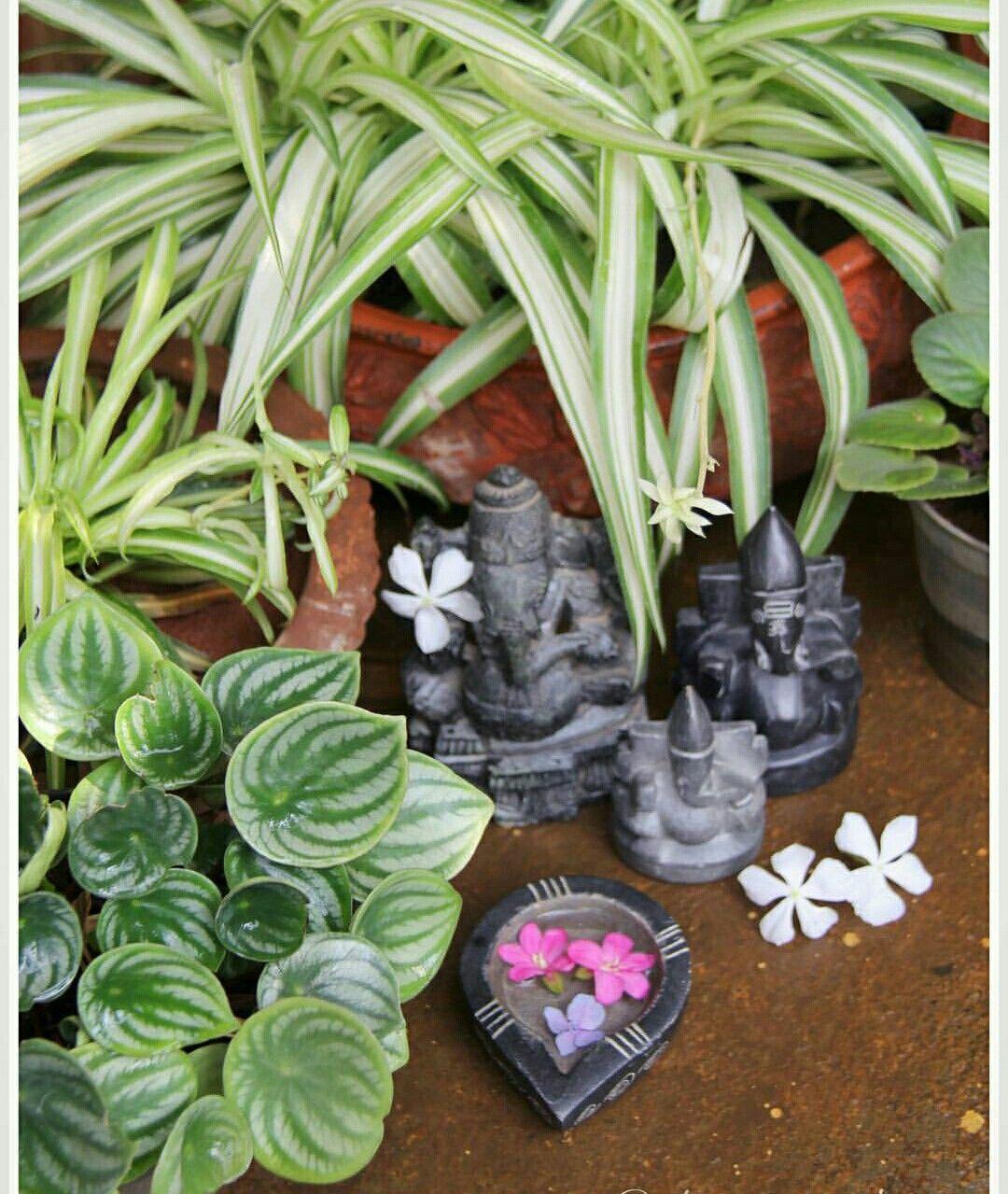 Pin by sharmila vinayagam on sv Indian garden, Plants