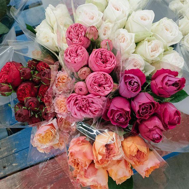 Just a half dozen  of garden roses can make a statement