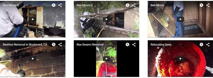 wasp nest removal Los Angeles waspnest waspremoval Bee