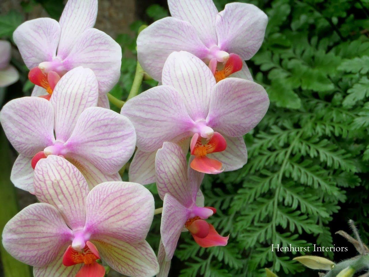 Henhurst dream garden orchids dream garden orchids