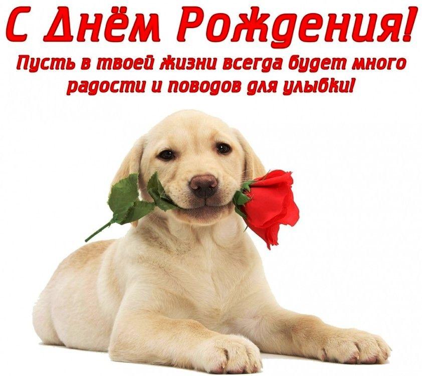 Красивые открытки животных с днем рождения женщине, открытки пожеланиями картинка
