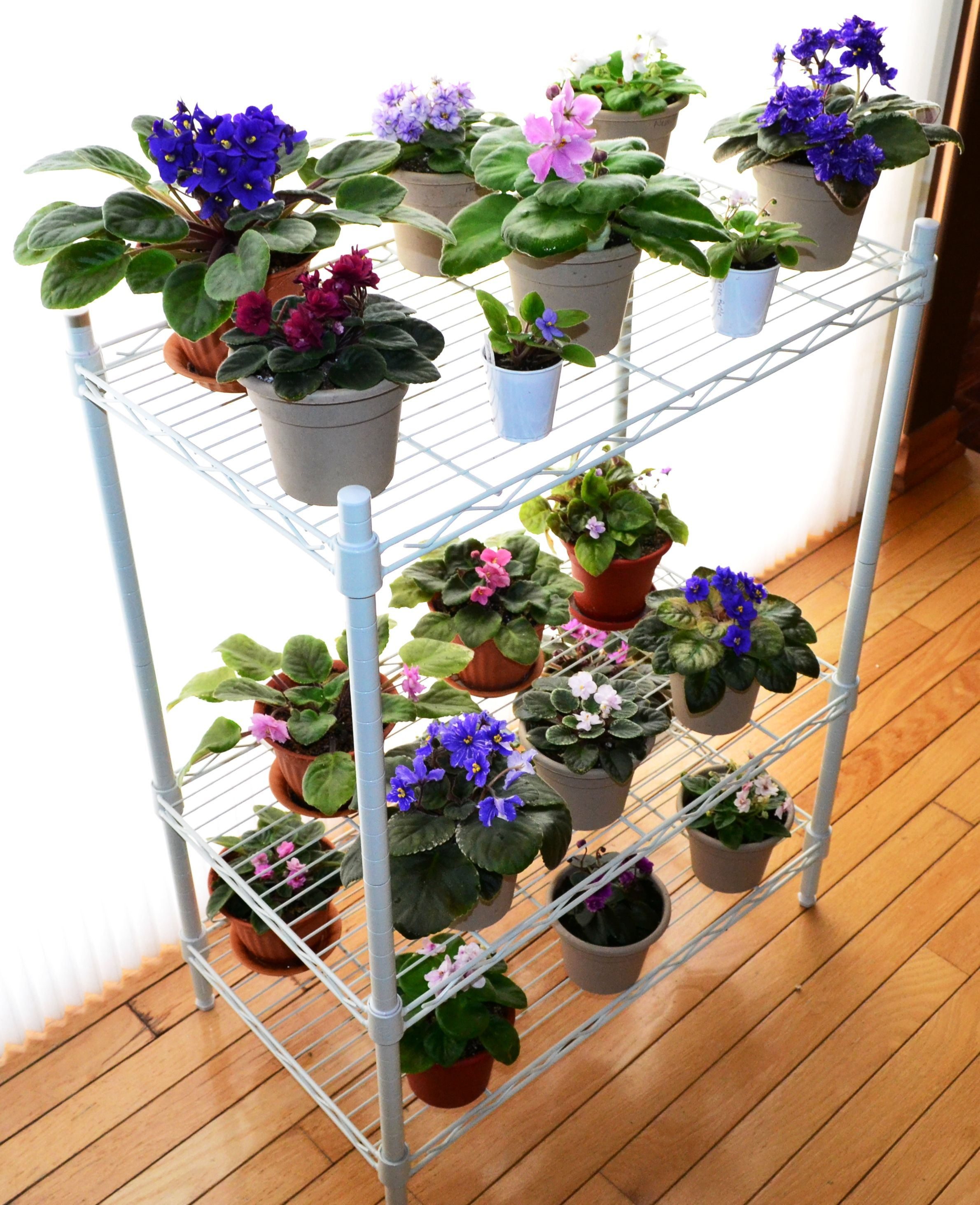 beautiful house plant stand. African Violet Plant Stand  They need morning sunlight