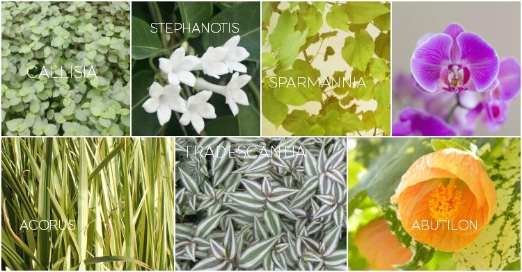 Rosliny Doniczkowe Bezpieczne Dla Zwierzat Ogrod Lobzow Plants Acorus Cat S