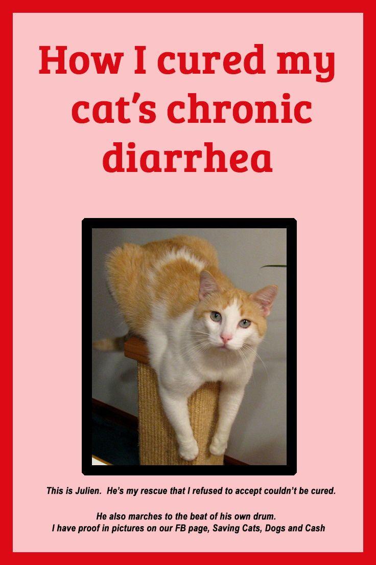 How I Cured My Cat S Chronic Diarrhea Saving Cats Dogs And Cash Cat Diarrhea Diarrhea Remedies How To Cure Diarrhea