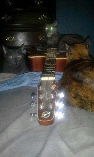 My hippie kitties